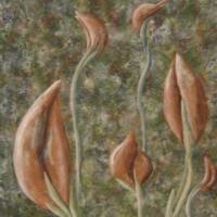 Surgosianische Lilien